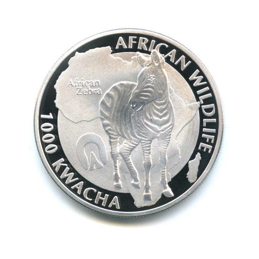 1000 квача - Дикая природа Африки - Африканская зебра, Замбия (серебрение) 2015 года
