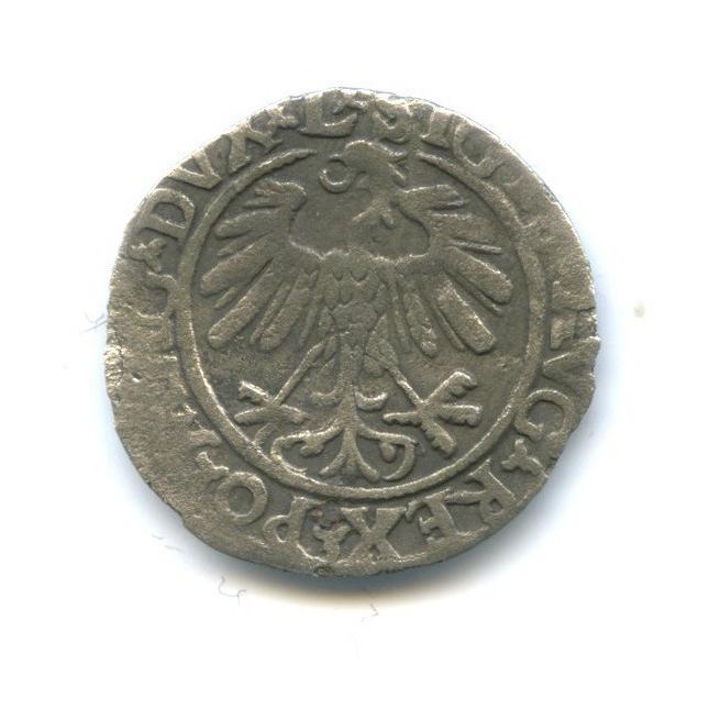Полугрош, Великое княжество Литовское 1559 года