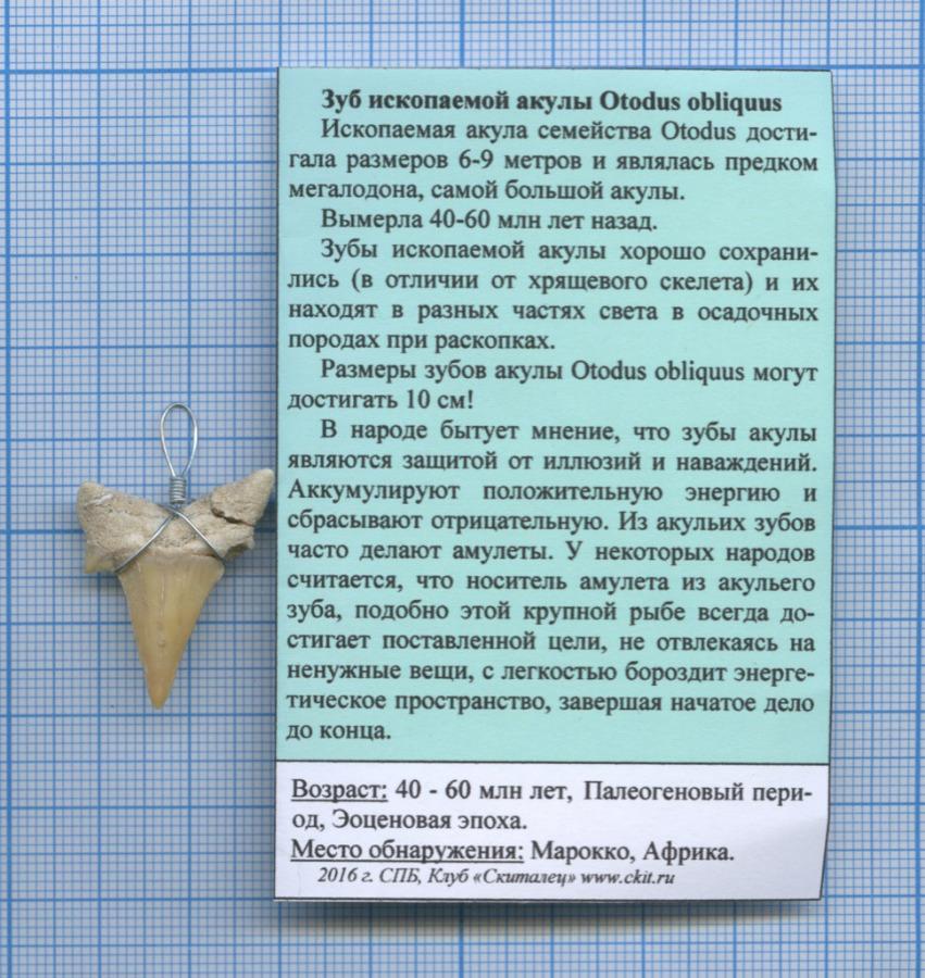Зуб ископаемой акулы Otodus obliquus (возраст 60-40 млн лет, Палеогеновый период, Эоценовая эпоха, место обнаружения - Марокко)