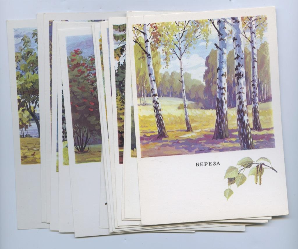 Набор открыток «Русский лес» (16 шт.) 1979 года (СССР)