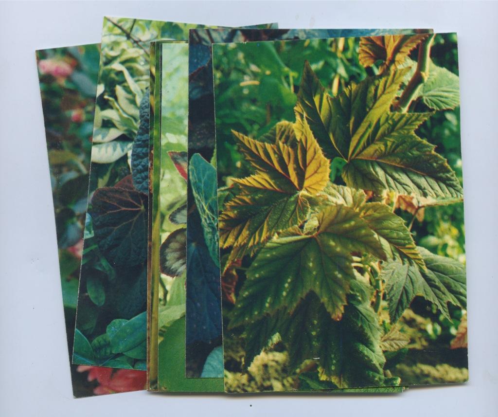 Набор открыток «Комнатные растения» (16 шт.) 1987 года (СССР)