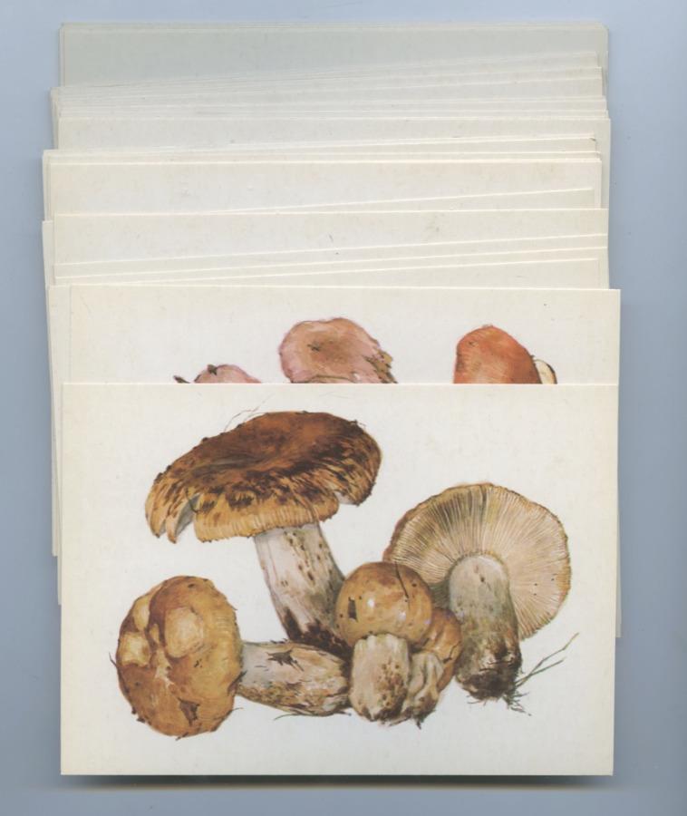 Набор открыток «Грибы» (32 шт.) 1976 года (СССР)