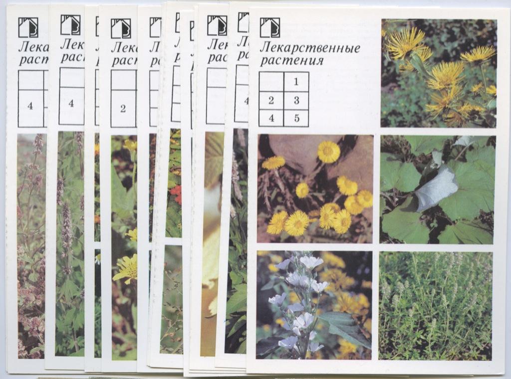 Набор открыток «Лекарственные растения», 18 шт. 1988 года (СССР)