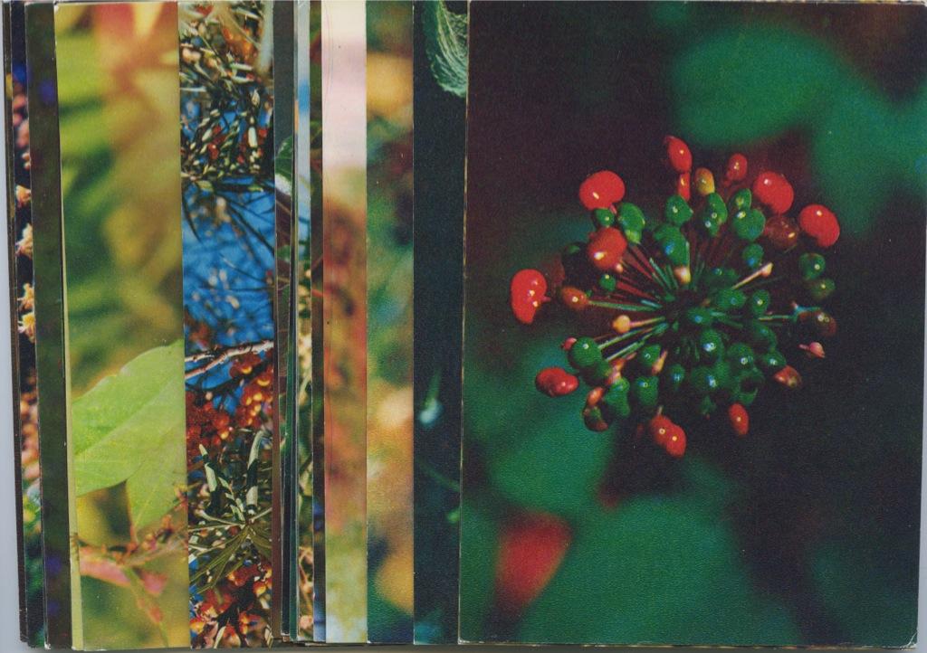 Набор открыток «Экскурсия вприроду - Лекарственные растения», 25 шт 1976 года (СССР)
