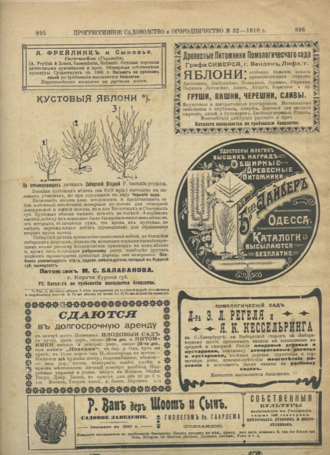 Журнал «Прогрессивное садоводство иогородничество», выпуск №32 (16 стр.) 1910 года (Российская Империя)