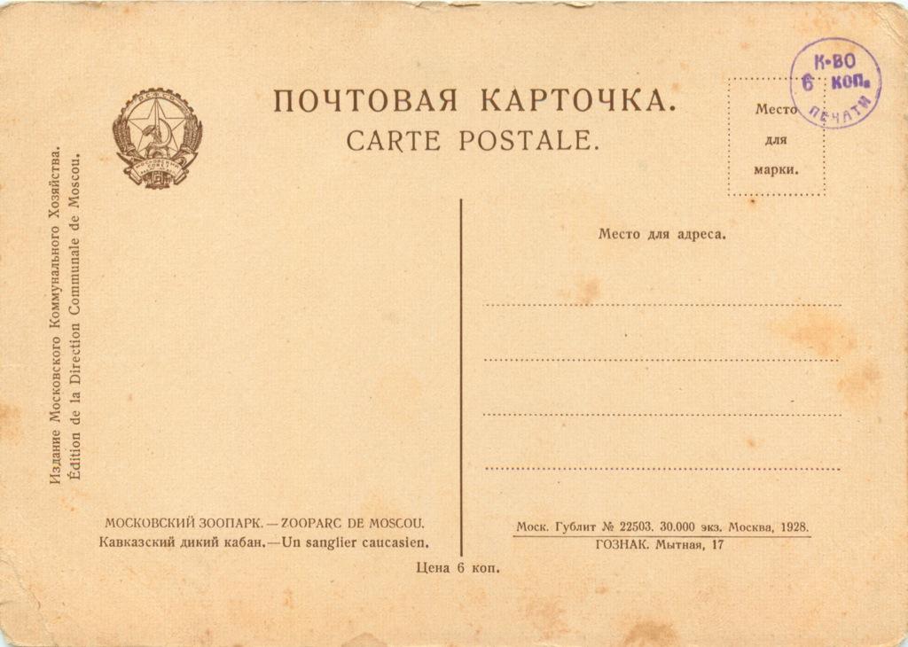 Карточка почтовая «Кавказский дикий кабан» (СССР)