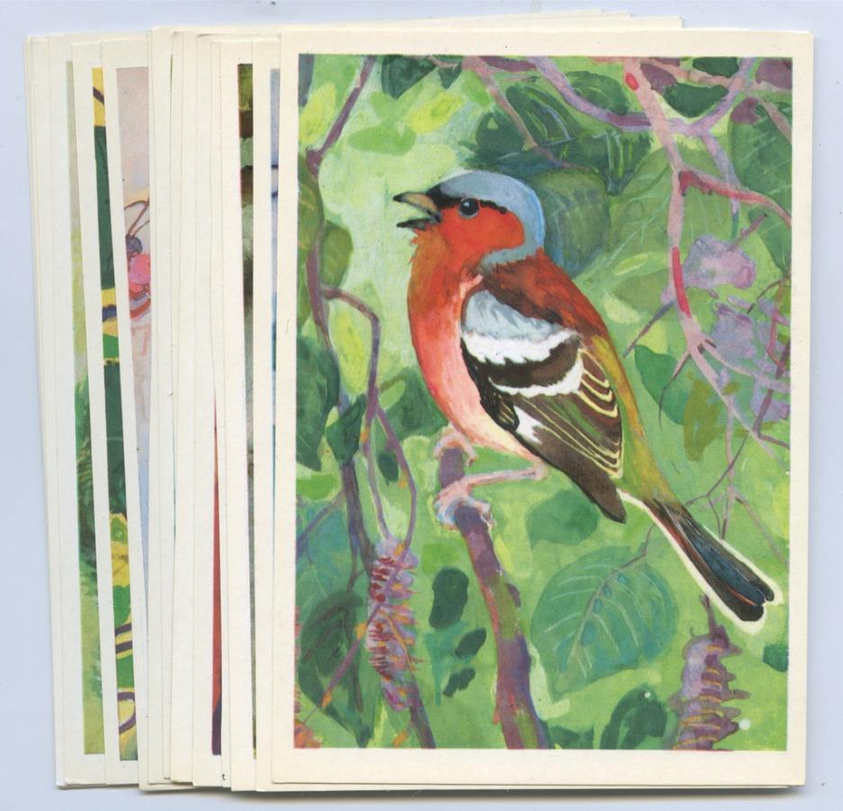 Набор открыток «Птицы русского леса» (16 шт.) 1979 года (СССР)