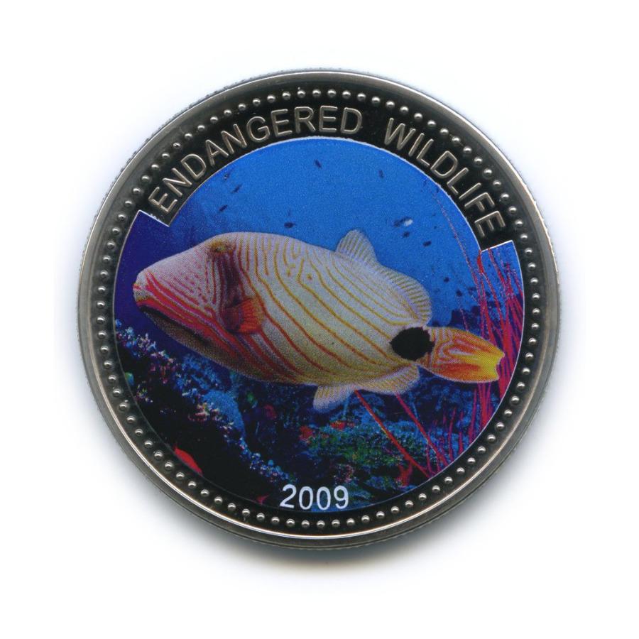 1 доллар - Под угрозой исчезновения, Палау (вцвете) 2009 года