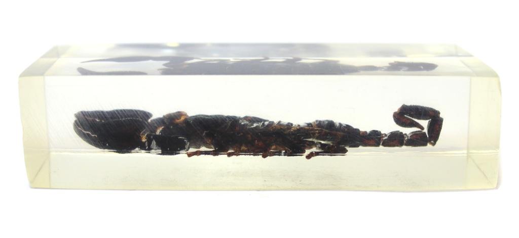 Сувенир вколлекцию «Скорпион встекле» (11×4,2 см)