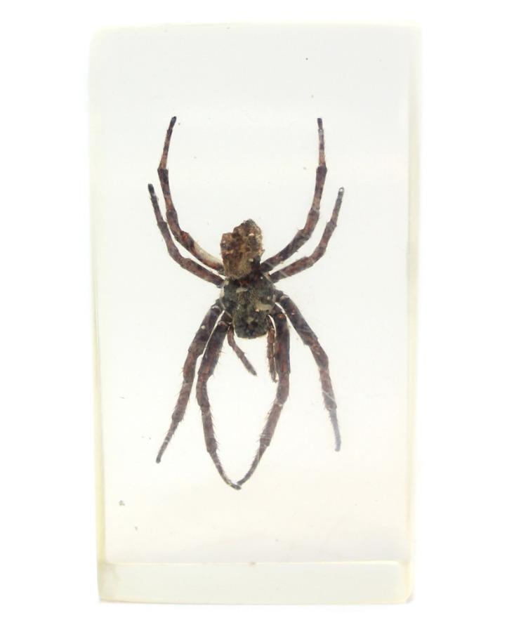 Сувенир вколлекцию «Паук в стекле» (7×4 см)