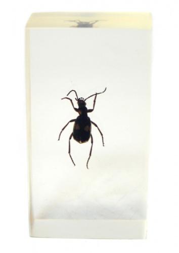 Сувенир вколлекцию «Насекомое встекле» (7,5×4 см)