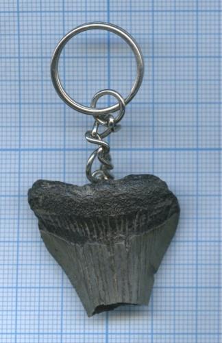 Брелок «Зуб акулы Мегалодон»