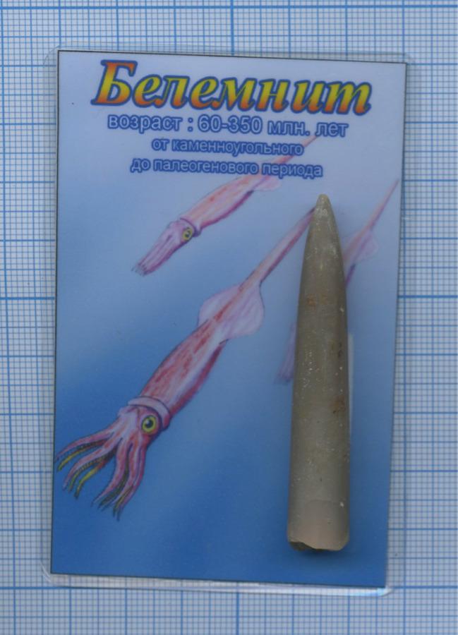 Белемнит (возраст 60-350 млн. лет откаменноугольного допалеогенового периода) (Россия)