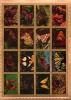 Набор почтовых марок (Умм-эль-Кайвайн)