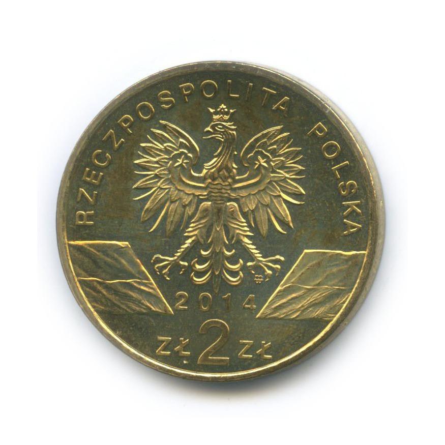2 злотых — Всемирная природа - Польский коник 2014 года (Польша)