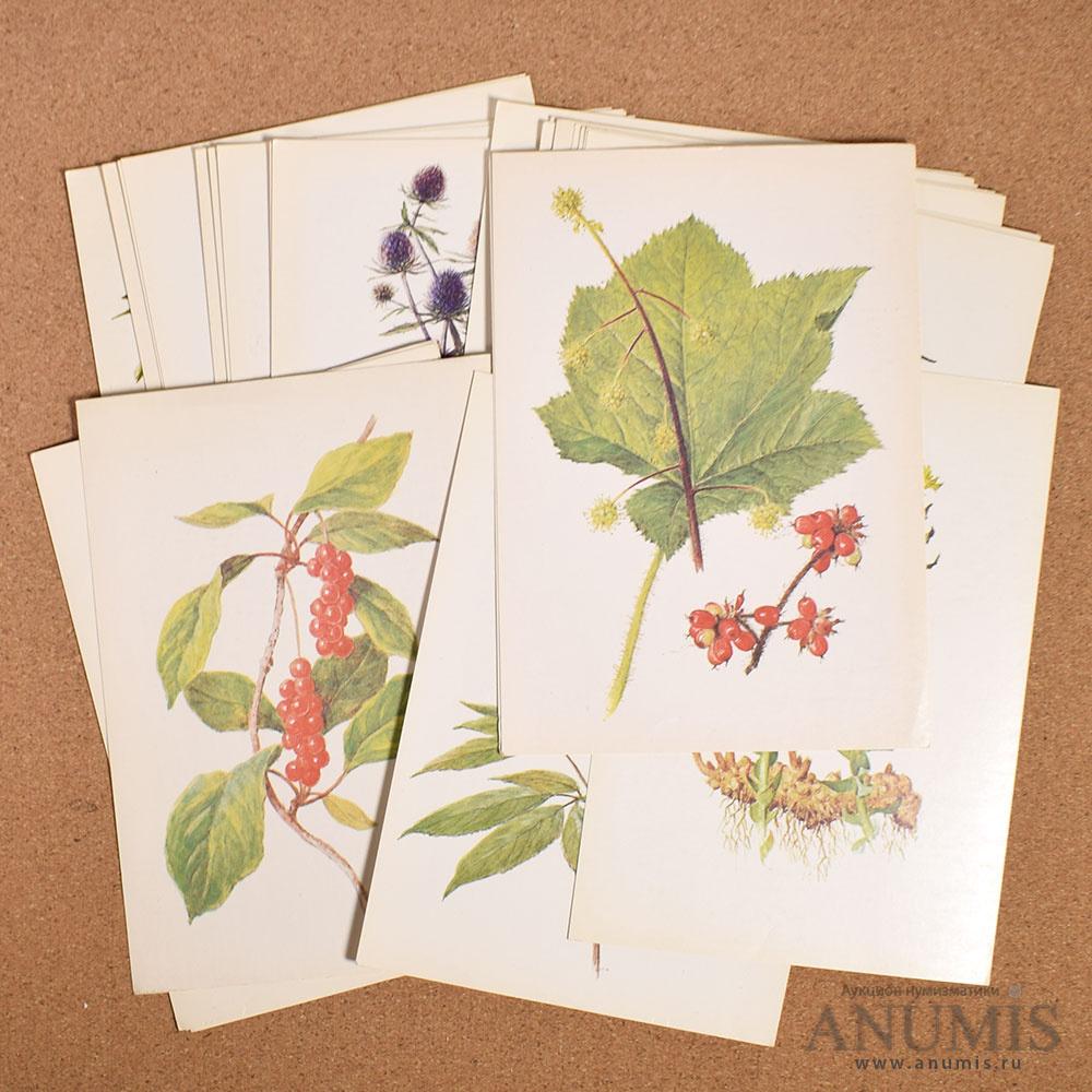 открытки лекарственные растения 1987 распространение которых произошло